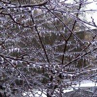 На 53 день зимы выпало одно ведро снегу и ледяной дождь :: Александр Скамо