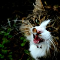 meow :: Анастасия Трунова