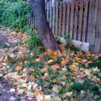 Осень :: Оксана Усатова