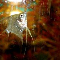 рыбка :: Юрий Гайворонский