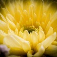 Just flower :: Yana Fizazi