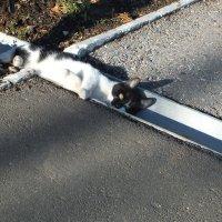 укрытие котика :: Михаил Николаев