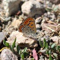 Бабочка :: Julia Martinkova