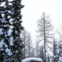 В лесу :: Евгений Усатов