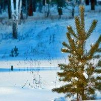 Маленькой елочке не холодно зимой :: Андрей Хлопин