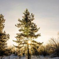 В лучах полуденного солнца :: Dmitri_Krzhechkovski Кржечковски