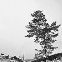 По заснеженной дороге :: Мария Кобылина
