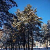 Краски зимы :: Ирина Приходько
