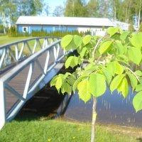 мост :: Андрей Герасимов