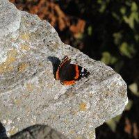 Жизнь на камне :: Михаил Лаврук