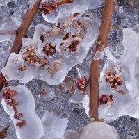 Ледяной панцирь :: Мария Авдонина