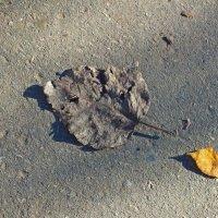 два листка на тротуаре. :: Михаил Николаев