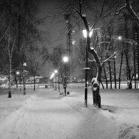 Зимний парк :: Tatiana Poliakova