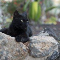 кошка-пантера :: юля каштанова