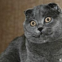 Кошка :: Настя Щур