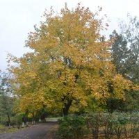 Дерево) :: Максим Бондоренко