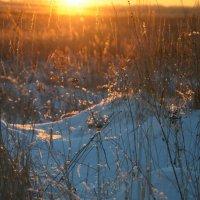 Зимний закат :: Дмитрий Кашук