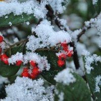 Под снегом :: Михаил Лаврук