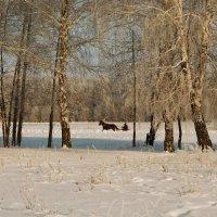 зимняя прогулка :: Виталий Волков