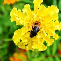 пчёлка* :: Dasha Ivanova