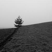 поле :: Юрий Бондер