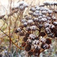 Осенние заморозки.. :: Андрей Самуйлов