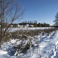много снега :: юрий иванов