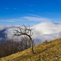 Согнутое ветрами :: Геннадий Валеев
