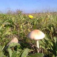 Придорожный грибок :: Марк Скеллхэм