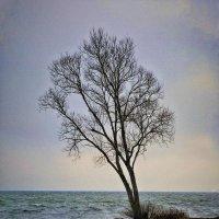 очень одинокое дерево :: Palsanovi4