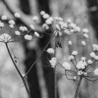 Зима :: Надежда Мартюшева