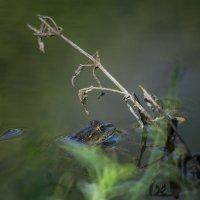 Цветной  сон :: Mikhail Arhangel