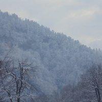 зима :: ольга зубкова