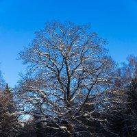 Зима :: Сергей Арсланов