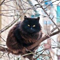 На дереве :: Екатерина Исаенко