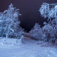 Зимняя тропа :: Григорий Храмов