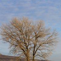 дерево :: Виктор Лавриченко