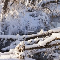 мороз и солнце... :: Елена Новгородцева