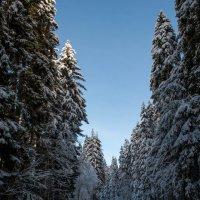 дорога в горы :: Евгений Khripp