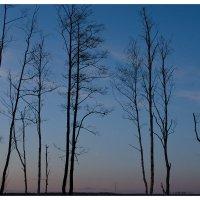 Осень :: Алёна Райн