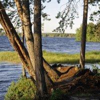 озеро Нюхти :: Владимир Боров