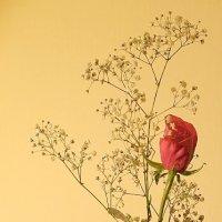 С восточной вазой в цвете :: Алла Шапошникова