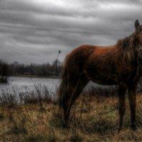 Тоска по-лошадиному :: Julia Yastreb