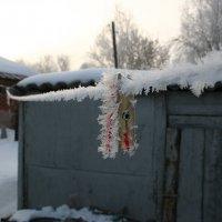 Прищепил меня мороз. :: Игорь Воронков