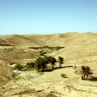 Миниоазис в Сахаре.. :: Надежда Баликова