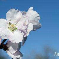Весна :: Андрей Дрожжин