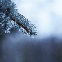 Прекрасная зима :: Дмитрий Харламов