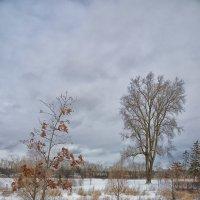 Winter in Northbrook. :: Gene Brumer