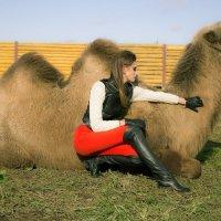 Фэшн с верблюдами :: Alsu Salachova