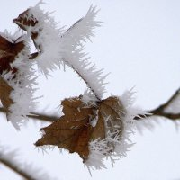 Зимние зарисовки. :: ФотоЛюбка *